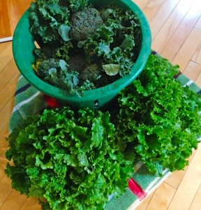 Kale, Broccoli, and Lettuce