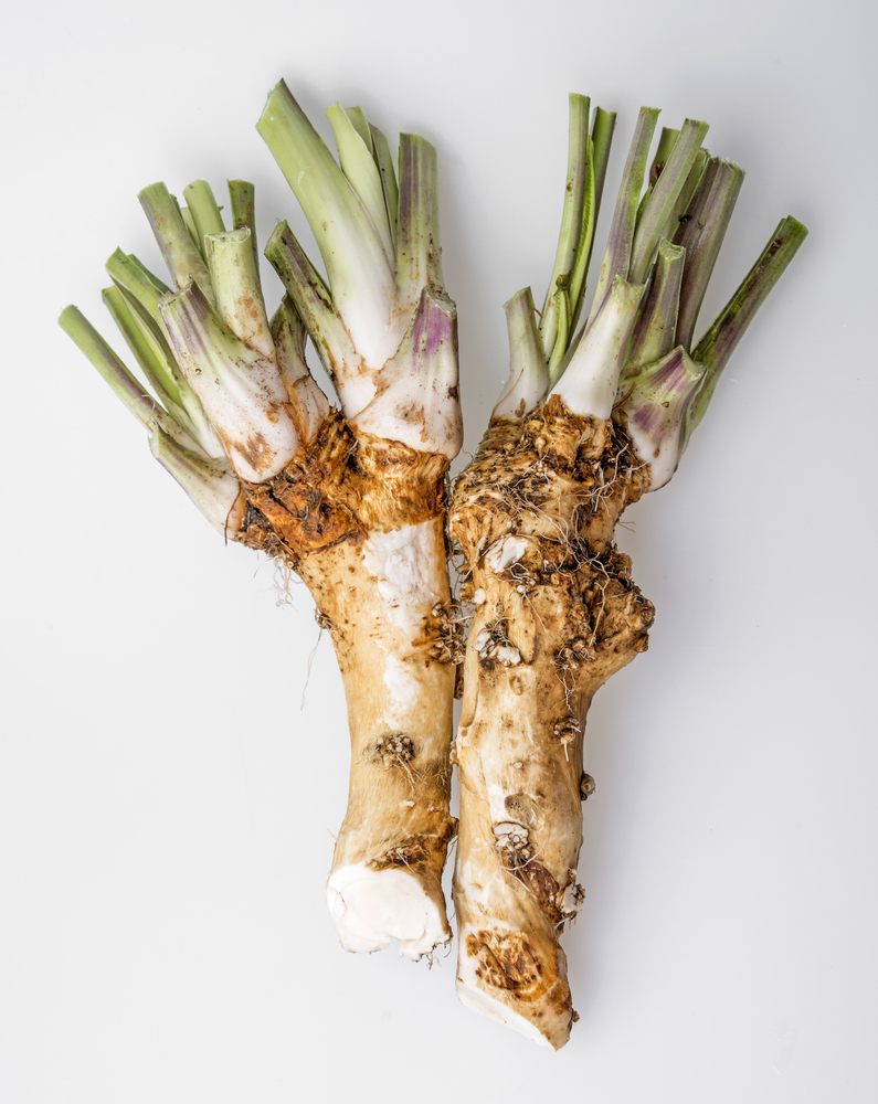 Fresh Horseradish Root On A White Surface